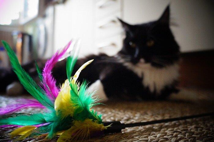猫じゃらしと言えば、まずこの形!棒の先に毛や羽根が付いたベーシックな形で、種類もたくさんあります。例えば、カラフルなものや音のなる鈴が付いたもの、ネズミやお花などぬいぐるみタイプのものなど。お手頃価格のものも多く、気軽に手軽に遊べるところが魅力です。
