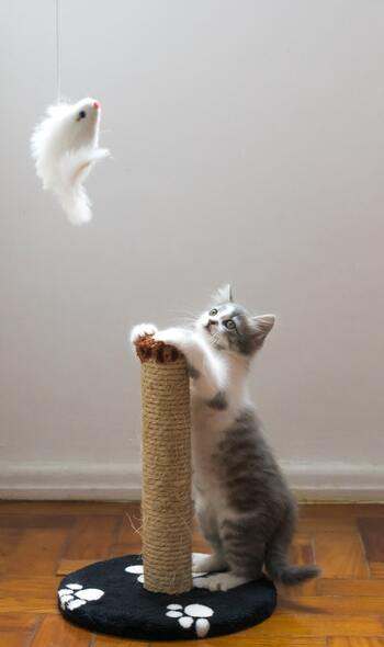 棒の先からのびた紐の先におもちゃが付いている釣り竿タイプ。紐のおかげで動きも大きく不規則になるので、飼い主さんは楽に、猫は楽しく遊べます。紐の先のおもちゃは、ネズミや鳥、トンボなど実際の生き物をモチーフにしたものがおすすめです。