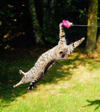 猫じゃらしを使って遊ぶときは、本物のように動かすことがポイントです。ネズミなら床を這うように、鳥の羽根や虫なら空中を舞うように動かしてみましょう。緩急をつけたり、動かす方向を変えたりするのも効果的◎猫の月齢や体力に合わせて、無理のない範囲で楽しく遊んであげてくださいね。