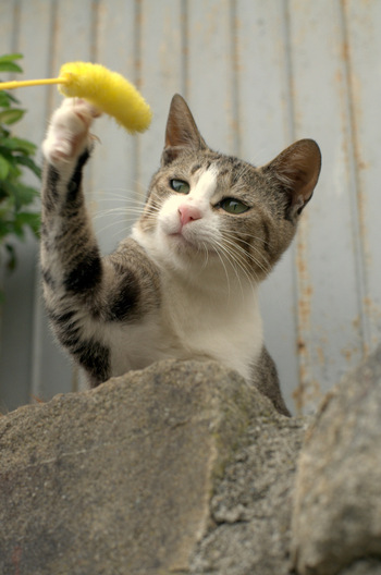 猫じゃらしの遊び方は猫次第。ひっかいたり、噛んだりする猫も多いでしょう。そうなると気になるのが耐久性。パーツの取り付け方のチェックはもちろん、口コミなども参考にして選びましょう。また、ランニングコストも重要です。特に電動・自動タイプの猫じゃらしは、交換パーツの有無や価格の比較検討も忘れずに。