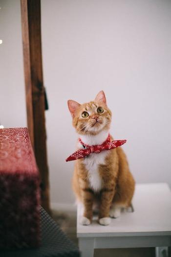 いろいろな猫じゃらしが出回っていますが、どの猫じゃらしが好きかは猫次第です。愛猫ちゃんの好みが分かるのは、一緒に暮らしている飼い主さんだけ!いろいろな猫じゃらしを試して、お気に入りを見つけてあげてください。