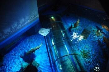 圧倒的水量の巨大な寒流・暖流大水槽を上から眺めると、光の反射でキラキラと輝き、大きな海を見ているよう。海中散歩気分が味わえるアクアトンネルなど、見応え抜群の展示が続きます。
