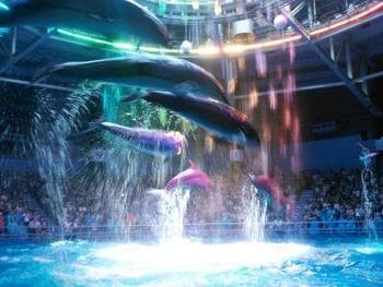 360°どこから見ても楽しむことができる円形プールでのイルカショーが大人気。音と光の演出で、まるで魔法にかけられたような、非日常の世界を体験することができます。
