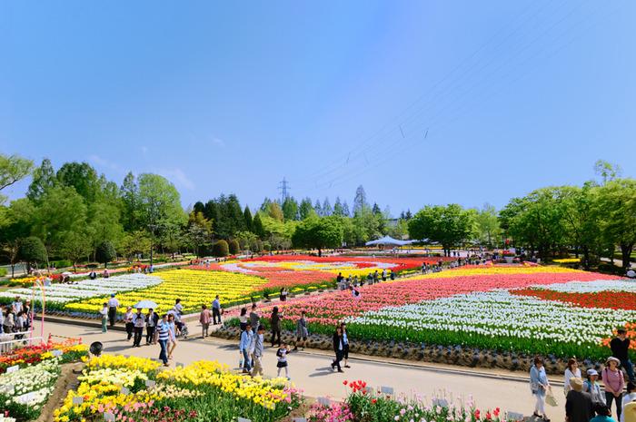 砺波チューリップ公園は、富山県の県花、砺波市の市花となっているチューリップをメインテーマとして四季折々で美しい花々を鑑賞することができる都市公園です。