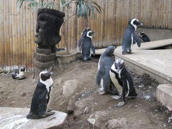 休憩所になっている広場にはペンギン村が存在し、垣根のすぐ内側では日常を送るペンギンたちのライフスタイルを覗き見することができます。