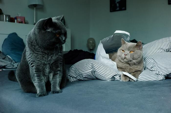 飽きっぽいことで知られている猫。猫じゃらしも、最初は気に入ってくれていたのに、最近は全く興味を示さない…なんてこともよくあります。こうした猫の飽きを防ぐためには、猫じゃらしは数種類用意しておくこと!複数の猫じゃらしをローテーションして遊べば、飽きることなく遊んでくれるでしょう。