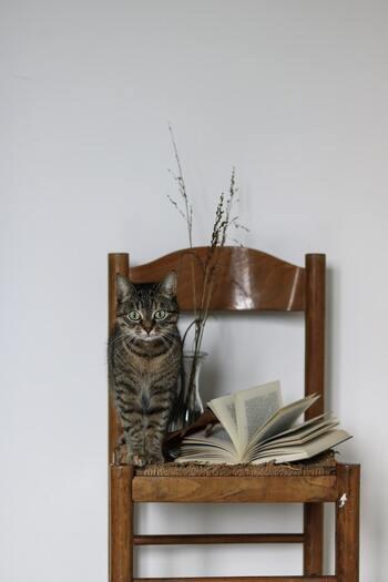 猫は大切な家族の一員。人間同士のように言葉で会話ができないからこそ、一緒に過ごしたりスキンシップによって距離を縮めることが大切ですよね。今回はそんな愛猫とのお遊びの時間に欠かせない「猫じゃらし」を特集します。猫じゃらしの種類や選び方・遊び方、おすすめの猫じゃらしや手作りする方法、収納のアイデアなどを幅広くご紹介していきます。