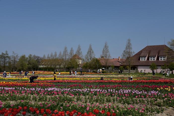 毎年春になるとメインのお花畑には約120種類、13万本のチューリップが咲き誇ります。広大なお花畑とドイツ風の建物が織りなす景色は日本離れしており、ここでは、まるでヨーロッパの田園都市を訪れたような気分を味わうことができます。