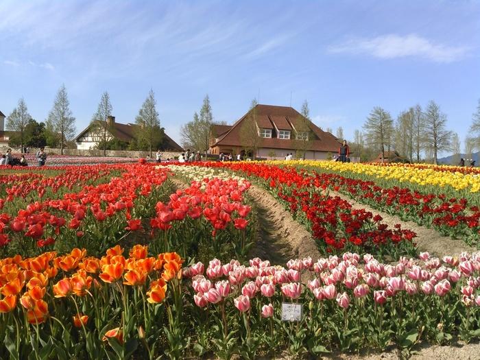 ブルーメの丘は、中世のドイツをモチーフにした動物とのふれあい、酪農、農業体験、花々鑑賞などを行うことができる体験型農業公園です。