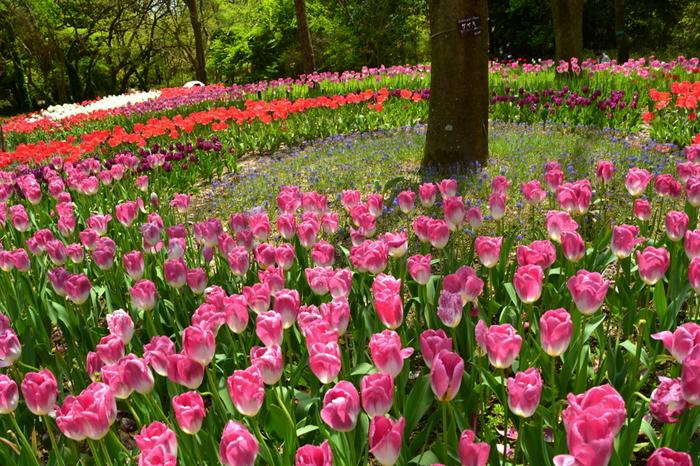 京都府が運営管理する京都府立植物園は、日本で最初の植物園として1924年に開園した歴史ある植物園です。約24ヘクタールにおよぶ敷地には、約12000種類、12万本の植物が栽培されており、四季折々で季節の花々を楽しむことができます。
