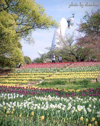 万博記念公園は、1970年に開催された大阪万博(日本万国博覧会)の跡地を整備して造られた公園です。広大な敷地内における自然文化園には大きなお花畑があり、毎年4月上旬から中旬にかけてチューリップが見ごろを迎えます。