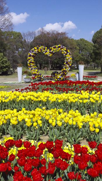大阪市が運営・管理する長居植物園は、大阪市住吉区に位置する都市公園・長居公園内にある植物園です。約24.2ヘクタールの植物園内は、約1000種類、61000本の植物が栽培されており、毎年4月になるとチューリップが見ごろを迎えます。