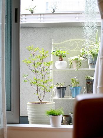 """ベランダは、風水では""""第二の玄関""""とも考えられ、良い気を循環させるために重要なスポットとされています。  また、足りない運気を補う場所ともいわれています。"""