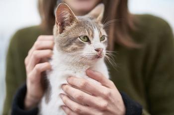 ぬいぐるみは猫好きさんへのプレゼントにもおすすめ。続いては、こだわりのぬいぐるみブランドや、北欧デザイナーのぬいぐるみをご紹介しましょう。