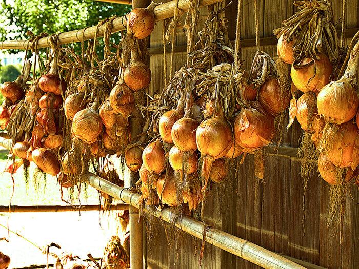 玉ねぎは風通しがよい場所で、直射日光を避けて常温保存します。ネットや古いストッキングなどに入れて吊るしたり、かごに盛って保存するなどが楽ちんです。
