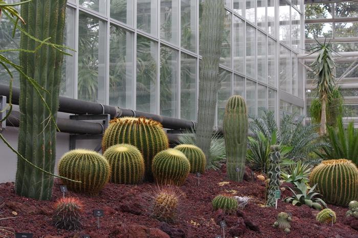 温室内では、約1300種類の植物が栽培されています。見学スペースは、熱帯の花木室・熱帯スイレン室・ベゴニア室の3つに分かれており、サボテンや食虫植物など珍しい植物も見ることができます。