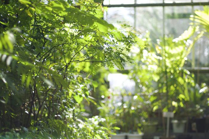 園内は温室をはじめ、水生植物区や有用樹木区、民間薬原料植物区など14の区画に分かれています。温室は、かわいらしい三角の屋根が目印。中に入ると、熱帯や亜熱帯地域の薬用・有用植物が展示されています。ガイドの方(花咲案内人)に案内してもらうこともできますよ。