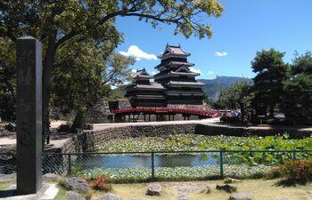 夏は眩しい新緑がひときわ美しく目に映る季節です。松本城のお池には睡蓮が咲き、上品な涼やかさで迎えてくれます。