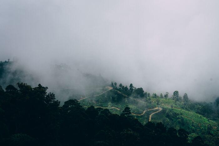 北東モンスーンは、海から水分を運びます。そして中央山脈の北東斜面に多くの雨を降らせるので、南西斜面のディンブラ地区には乾いた風があたり、生産量が増える仕組み。それに対して南西モンスーンの時期は、コロンボから中央山脈南西部の大茶園は雨期となり、生産量は増えるのです。
