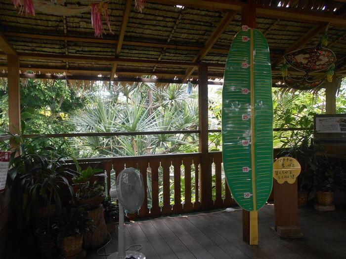 温室は、潮間帯植生・熱帯低地林・集落景観の3つのスペースに分かれており、場所ごとに異なる植物を楽しむことができます。こちらは集落景観ゾーン。気分はすっかり南国ですね♪