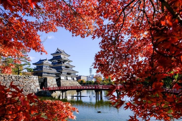 秋には紅葉が見事です。お城とお濠、真っ赤に染まったもみじに赤い橋が美しい。秋晴れの天気の中で楽しみたいですね。