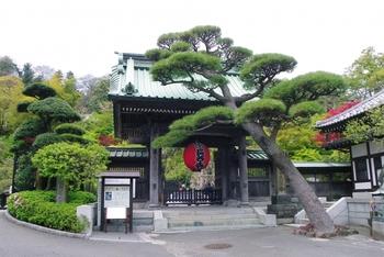 一年中人気が高い「長谷寺(はせでら)」。長谷寺といえば紫陽花でとても有名ですが、初詣もやはり多くの人で賑わいます。