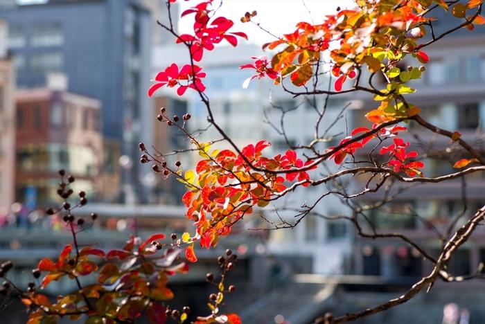 京都ひとりごはん15選。観光中の休憩や行きつけにしたい隠れ家集めました