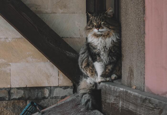 空前の猫ブーム。「猫の本ってこんなにあるんだ!?」とびっくりします。店内は、ほぼ全ての表紙が見えるようにディスプレイされており、立ち読みも◎。ゆったり、のんびり、自由な猫たちの世界に癒されましょう。