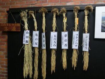 見応え抜群の酒蔵見学は予約不要。風土を意識した酒造りの工程を、じっくり学べる。お米の種類もこんなにあるんです。
