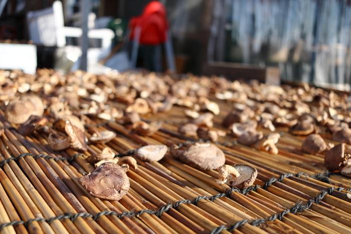 干し椎茸は密閉して冷暗所に保管しておけば1年間は持つと言われています。湿度には弱いので、風通しの良い場所に置いたり乾燥剤を利用するなどの工夫をしましょう。