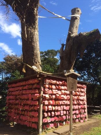 根本が一本、幹が二本の「むすびの樹」は、良縁成就のスポットです。ピンク色の絵馬をかけて、素敵なご縁をお願いしましょう。