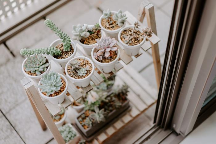 寒さに弱い植物を置くときは、晴れた日の暖かいときにベランダで日光浴させ、陽がくれてきたらお部屋へ移動。 お部屋から出し入れしやすい小さなラックにまとめると管理しやすくて便利です。