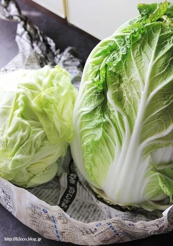 白菜やキャベツは、カットものを買うよりも丸のままで買うほうが経済的ですし、だんぜん長持ち。芯の部分に包丁で切込みを入れ、新聞紙やペーパータオルで包んで野菜室で保存します。使うときは外側の葉から一枚ずつはがして。 冷凍するときは、加熱なしのダイレクトフリージングでOKですよ。