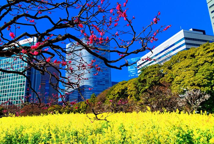 汐留駅から近い「浜離宮恩賜庭園」は、江戸時代に徳川将軍家の別邸だった大名庭園で、明治維新後は皇室の離宮となりました。池の周りを歩きながら景色を楽しむことができる都会の贅沢スポットです*