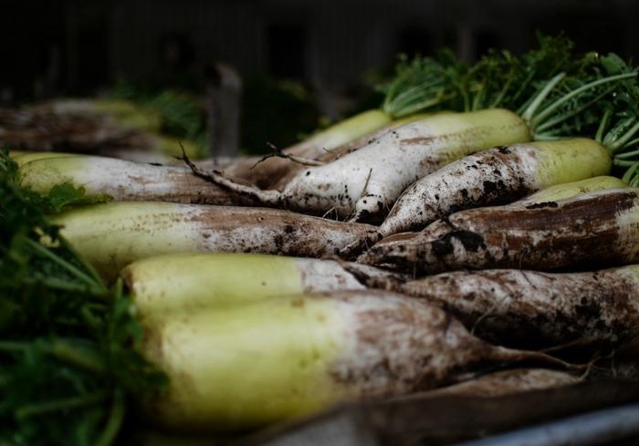 冬が主な旬となる根菜類は、実は冷凍にも向いています。特にお試しいただきたいのが、大根。ダイレクトフリージングの方法で冷凍した大根は、生の時よりもずっと火が通りやすく、味がしみやすくなるんです。煮物やおでん、スープやぶり大根…時間がかかって大変!と思っていた料理も気軽に取り組めるようになりますよ。