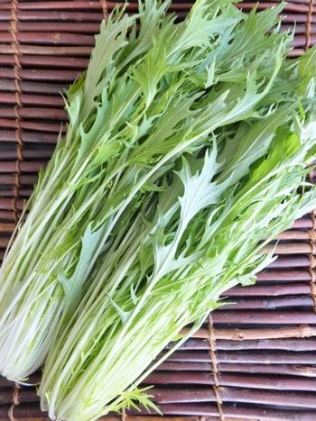 冬の鍋物にもよく使われる水菜は、ほっそりとした見た目に反してさまざまな栄養を豊富に含む緑黄色野菜です。風邪の予防や疲労の回復、肌荒れなどに効果があるビタミンCのほか、カロテンやカリウム、カルシウム、ミネラルであるマグネシウムや鉄、リン等、幅広い栄養素を蓄えています。