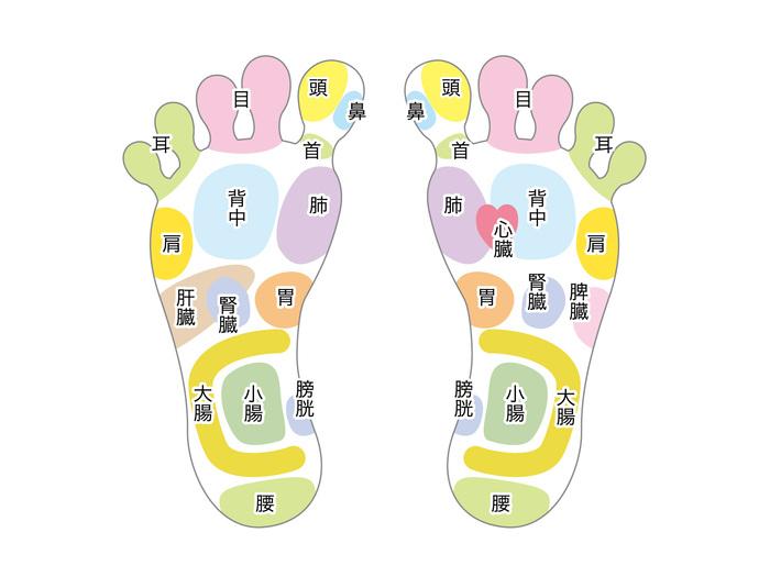 ■足裏マッサージのつぼの押し方 画像のように、足の裏には身体の臓器と対応する、反射区があります。足裏マッサージの押し方は、棒か指でつぼを3回ほど押します。少し強めでも大丈夫ですが、初めての場合には、痛みなど様子を見ながらお試しください。1箇所を数センチずつ押し流しながら、押す順番通りにすすみます。こするというよりは、ゴリゴリと何かを感じるところまで深く押し流します。