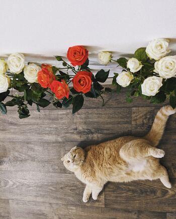 私だけのお気に入りを見つけよう♪きゅんと心奪われる「猫モチーフ」アイテム