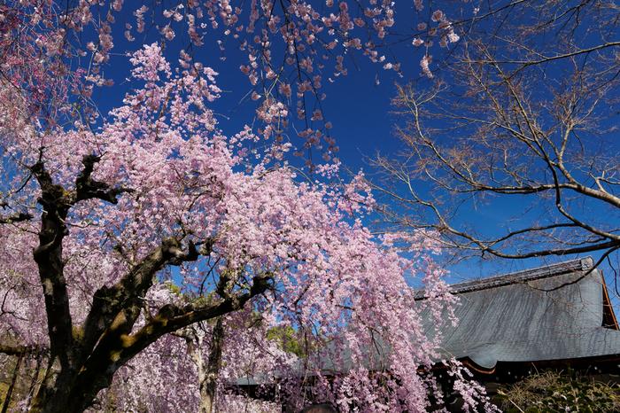 世界遺産に登録されている天龍寺は、1345年に足利尊氏が後醍醐天皇の菩提を弔うために建立した臨済宗の寺院です。