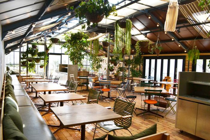 FARMER'S KITCHEN (ファーマーズキッチン)の店内は解放感に溢れています。高い天井からは、たくさんの観葉植物が吊り下げられており、まるで植物園の中でお食事をいただくような気分を味わうことができます。