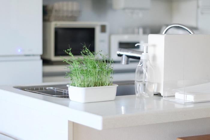 「アクリルたわし」ではなく「環境に優しい洗剤」を使っても、日常で困ることは少ないかもしれません。  「環境に優しい洗剤=洗浄力が弱い」と思われがちですが、まずはお皿や調理器具についた油などをウエスや新聞紙などで拭き取れば、やや優しい洗浄力でも、汚れは落としやすいはず。