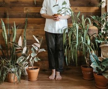 【観葉植物】で部屋をもっと素敵に♪初心者におすすめの14種と基本の育て方