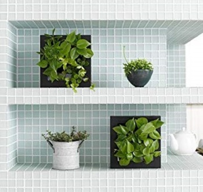 土を使わない 壁掛け 観葉植物 FRAMEホワイト17Y4