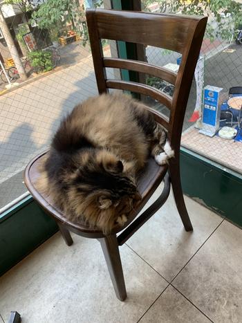 ディー・カッツェにはふわふわと毛足の長い上品な王族猫が4匹。猫店長で父猫の「ケーニッヒ」をはじめ、店長代理で息子の「カイザー」、母猫の「クイーン」、娘猫の「女王」がのんびり過ごしています。優雅で堂々たる佇まいは王族と呼ばれているのにもしっくりきます。