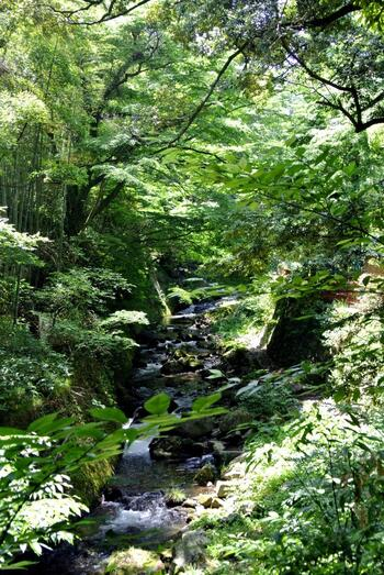 四季折々の自然が美しく、園内を流れる川のせせらぎを聞きながらの散策はリフレッシュ効果抜群です。