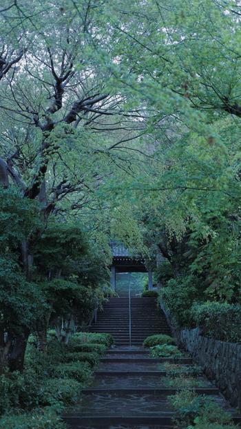 湯河原駅から歩いて10分ほどのところにある「城願寺」は、パワースポットとして注目されているお寺。その歴史は古く、800年以上前に創建されたと言われています。表参道から続く階段は見上げるような高さですが、整備されて登りやすいのでご安心を。