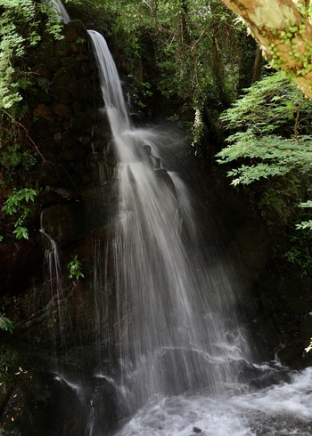 不動滝はお茶屋さんからすぐ見えます。落差15mから流れ落ちる水の音は迫力満点。幹線道路から近いのに、ここはとても静かで木々が揺れる音と滝の音、鳥のさえずりだけが聴こえてきます。