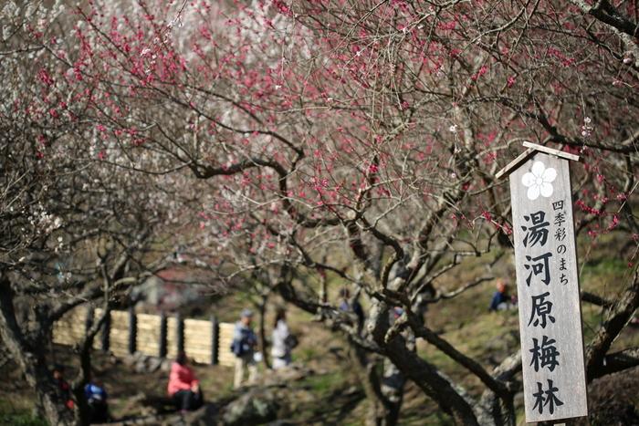 【湯河原】自然・温泉・グルメを満喫♪女子旅におすすめの観光&ランチ案内