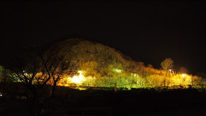 夜はライトアップが行われ、昼間とはまた違ったロマンチックな光景。夜の山に浮かぶ幻想的な梅もぜひ楽しんでみてはいかがでしょうか?