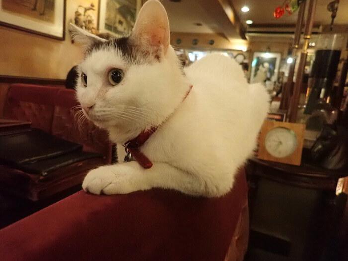何よりの特徴はやっぱり可愛らしい看板猫ちゃんがいること!決して「猫カフェ」というわけではなく、「猫がいる」喫茶店です。ふと気が付くとソファーの上にいたり、入口にいたり、気ままなところがまた癒されます。